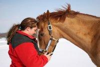 koń zimą