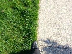 trawa w ogródku
