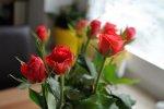 czerwone róże w ogrodzie
