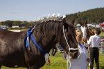 koń wspomagający rehabilitację
