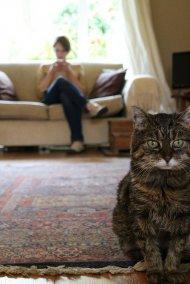 Kot w salonie
