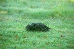 kopiec kreta na trawniku